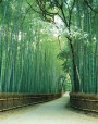 bamboo-bordered path, Sagano, Kyoto prefecture, Japan.