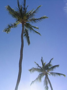 genericprofile-palms.jpg